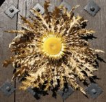 "A carlina thistle pinned on a door to protect residents from ""the evil eye"""